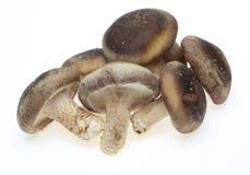Shiitake mushrooms Stock Images