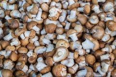 Shiitake Mushrooms  for sale at market Stock Photos