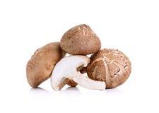 Shiitake Mushrooms  on the white background Royalty Free Stock Photos