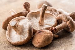 Shiitake mushrooms on the wooden background.
