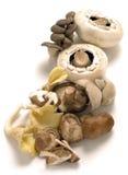 Shiitake, oester en traditionele paddestoelen Stock Foto