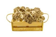 Shiitake pieczarka, Lentinus edodes (Berk ) (Lentinula edodes (Berk , Czarny Mushroo Zdjęcie Stock