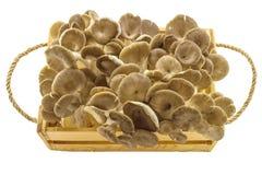 Shiitake pieczarka, Lentinus edodes (Berk ) (Lentinula edodes (Berk , Czarny Mushroo Obraz Stock