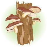 Shiitake pieczarki dorośnięcie na drzewach ilustracja wektor