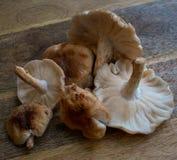 Shiitake pieczarki na drewnianej ciapanie desce, zdjęcia stock