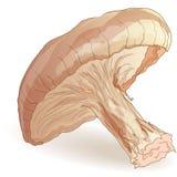 Shiitake pieczarki wektor royalty ilustracja