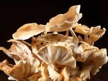 Shiitake pieczarki - Zdrowy odżywianie zdjęcia stock