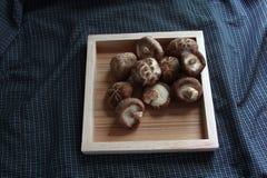 Shiitakepaddestoel op dienbladmat Stock Foto