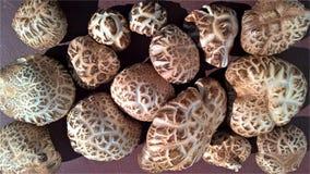 Shiitakepaddestoelen - de zomeroogst Stock Foto's