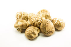 Shiitakepilze (Lentinula-edodes). Stockfotografie