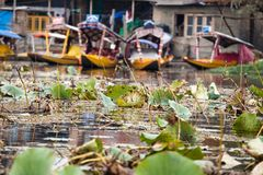 Shikara boat in Dal lake , Kashmir India Royalty Free Stock Photos