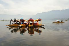 Shikara boats in Dal lake, Srinagar, Kashmir Stock Images