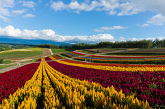 Shikisai-inget-oka Biei, Japan på sommar Royaltyfri Bild