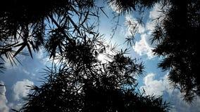 shilhouette Tapete lizenzfreies stockfoto