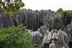 Shilin Stone Forest Royalty Free Stock Photos