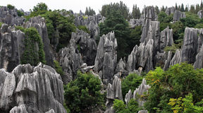 Shilin Stone Forest Royalty Free Stock Images