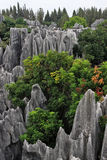 Shilin Stone Forest Stock Photography