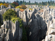 Shilin Stone Forest Royalty Free Stock Photography