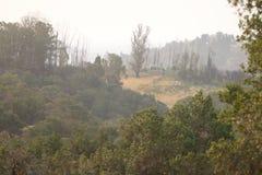 Shiloh Ranch Regional California Le parc inclut les régions boisées de chêne, forêts de plantes vertes mélangées photos stock