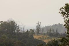 Shiloh Ranch Regional California Le parc inclut les régions boisées de chêne, forêts de plantes vertes mélangées photographie stock libre de droits