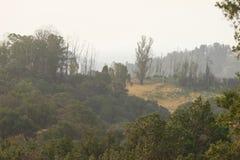Shiloh Ranch Regional California Le parc inclut les régions boisées de chêne, forêts de plantes vertes mélangées photos libres de droits