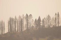 Shiloh Ranch Regional California O parque inclui as florestas do carvalho, florestas de evergreens misturados imagens de stock