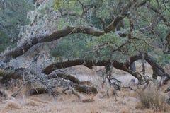 Shiloh Ranch Regional The-het park omvat eiken bossen, bossen van gemengd evergreens, randen met vegende meningen van Santa Rosa Royalty-vrije Stock Afbeelding