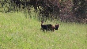 Shiloh Ranch Regional Park, Califórnia - o peru selvagem filme