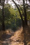 Shiloh Ranch Regional  The park includes oak woodlands, forests of mixed evergreens, ridges with sweeping views of the Santa Rosa Stock Photos