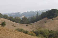 Shiloh Ranch Regional The park includes oak woodlands, forests of mixed evergreens, ridges with sweeping views of the Santa Rosa. Plain, canyons, rolling hills stock photography