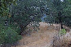 Shiloh Ranch Regional The-Park schließt Eichenwaldland, Wälder von Mischevergreens, Kanten mit ausgedehnten Ansichten Santa Rosas stockbild