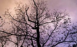 Shilouette-Baum lizenzfreie stockfotografie
