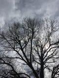 Shilouette da árvore Imagem de Stock