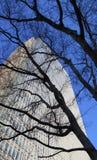 Shilouette del árboles grandes delante de builing alto Imágenes de archivo libres de regalías