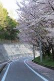 Shimanami Kaido самая популярная трасса велосипеда в Японии стоковое изображение rf