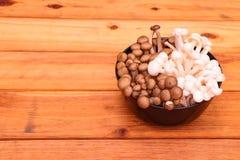 Shimeji蘑菇 库存照片