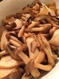 Shimeji蘑菇 库存图片