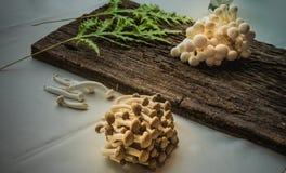 Shimeji il fungo commestibile sulla tovaglia di legno e bianca fotografia stock