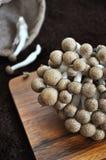 Shimeji Japanese Mushroom Stock Photos