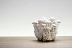 Shimeji - Japanese Mushrooms Stock Images