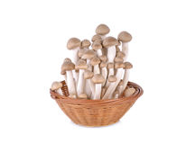 Shimeji mushroom, brown beech mushroom in the basket and on whit Royalty Free Stock Photos
