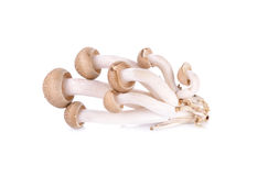 Shimeji mushroom, brown beech mushroom on white background Royalty Free Stock Images