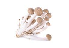 Shimeji mushroom, brown beech mushroom on white background Stock Image