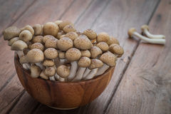 Shimeji mushroom brown in wooden bowl Stock Photography