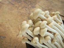 Shimeji mushroom Stock Image