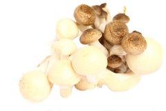 Shimeji mushroom Royalty Free Stock Photography
