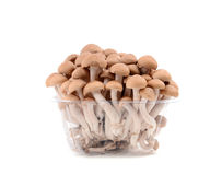 Shimeji mushroom isolated Stock Photo