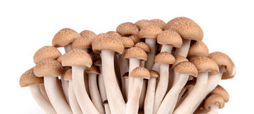 Shimeji mushroom isolated Royalty Free Stock Photo