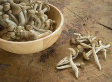 Shimeji mushroom Royalty Free Stock Photo