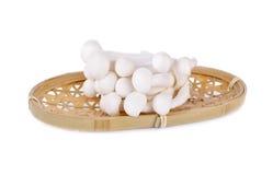 Shimeji mushroom, white beech mushroom in bamboo basketon white Royalty Free Stock Image